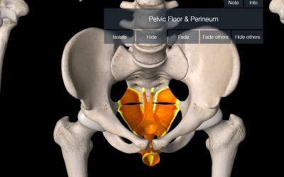 Pelvic Floor Dysfunction Symptoms