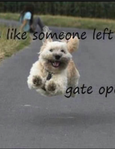 Dog running happy
